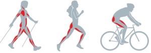 zapojeni-svalu-nordic-walking